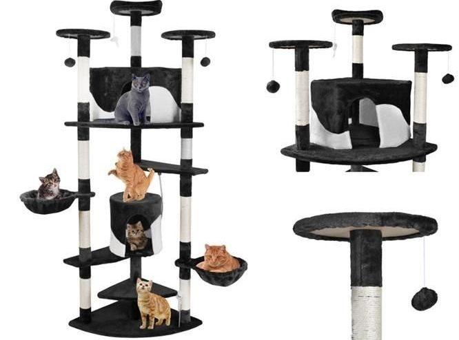 5 lucruri de care are nevoie pisica ta